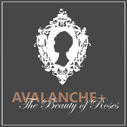 Avalanches Roses - Partner Le Spose di Milano